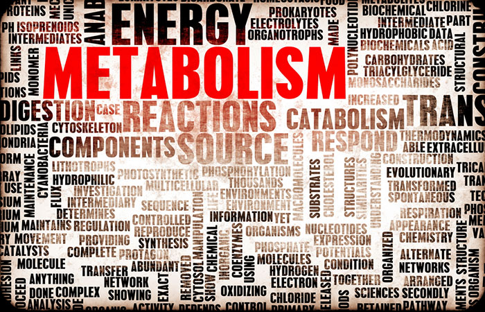 Metabolism feat