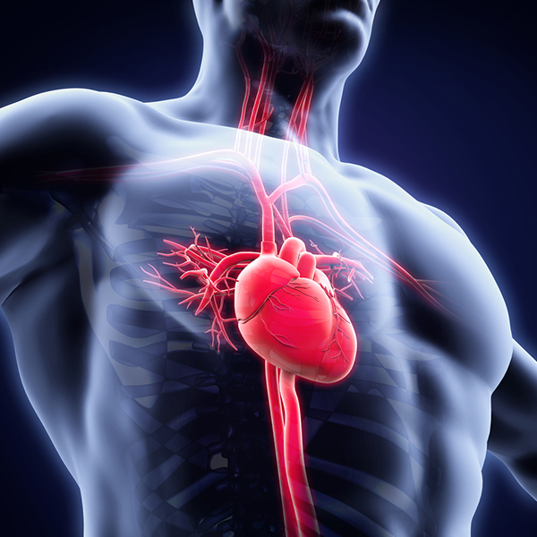 cardio cons