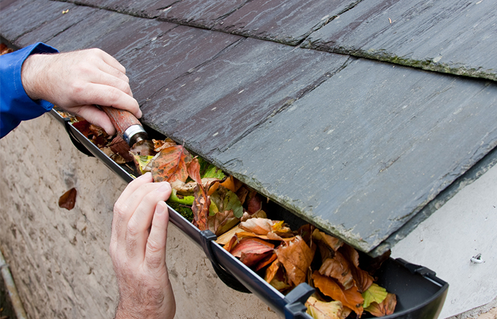 You found shingle granules in your gutters