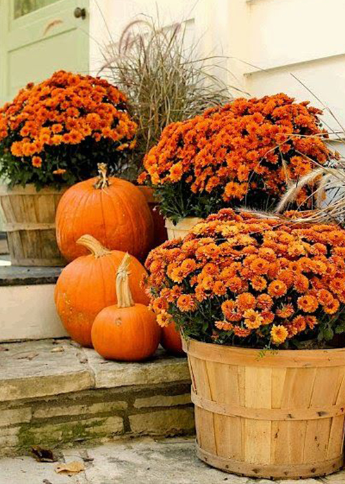 Purchase Fall Plants
