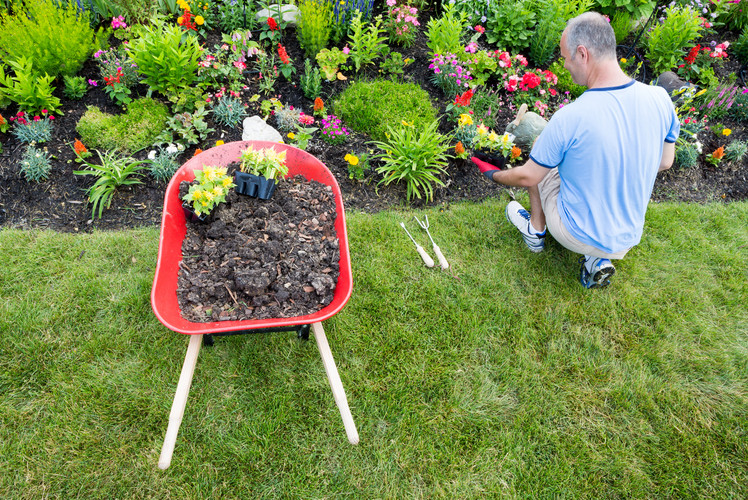Spruce Up Your Landscape