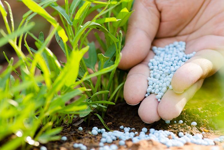 Fertilize
