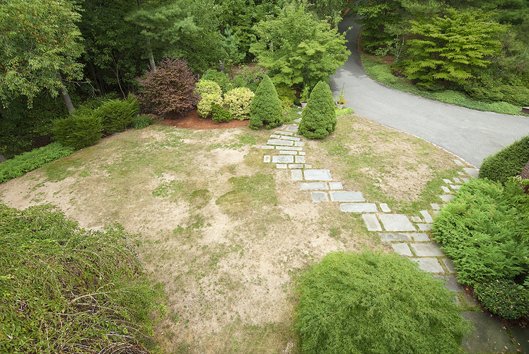 Learn signs of lawn disease