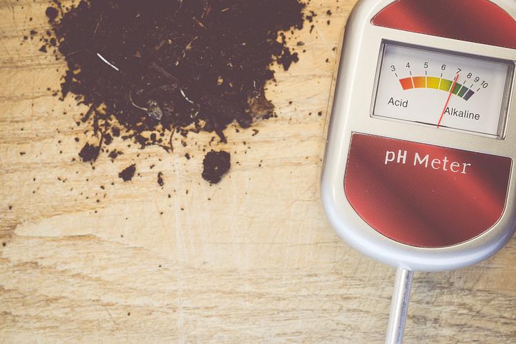 pH test of soil