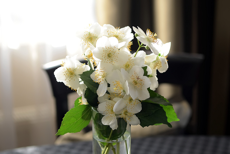 bring fresh flowers into your home