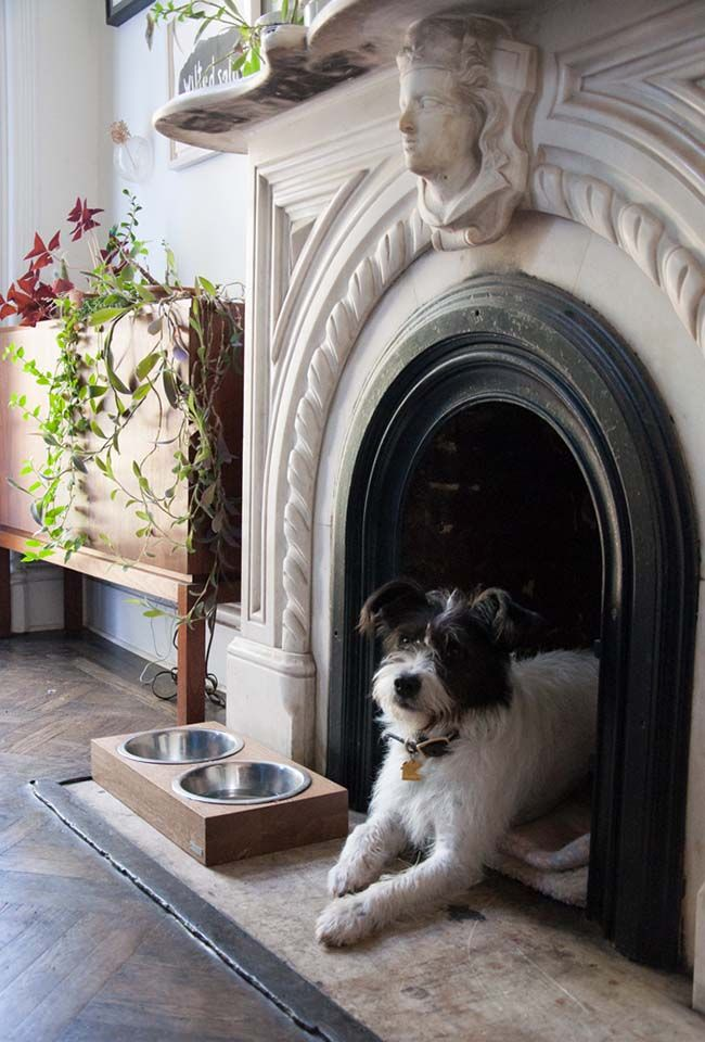 doggie den in an unused fireplace