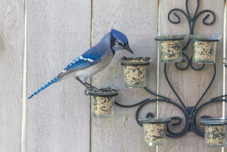 Tea light Birdfeeder