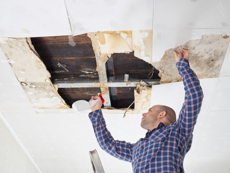 Discover the best mold remediation or removal methods