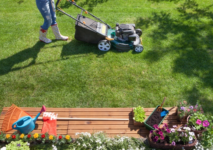 Discover the best ways for caring for a lawn