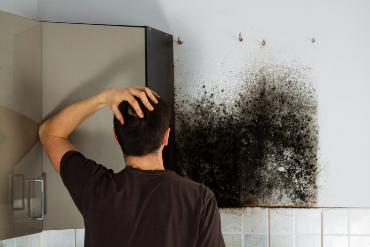 Understanding mold infestation