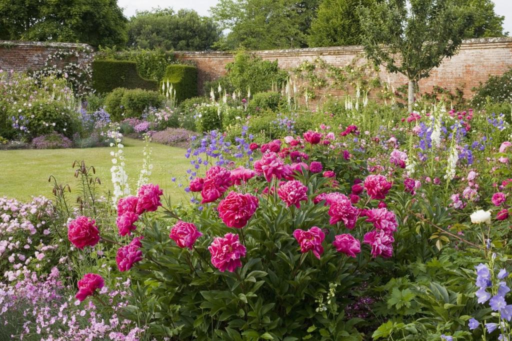 Grow vibrant classic flowers