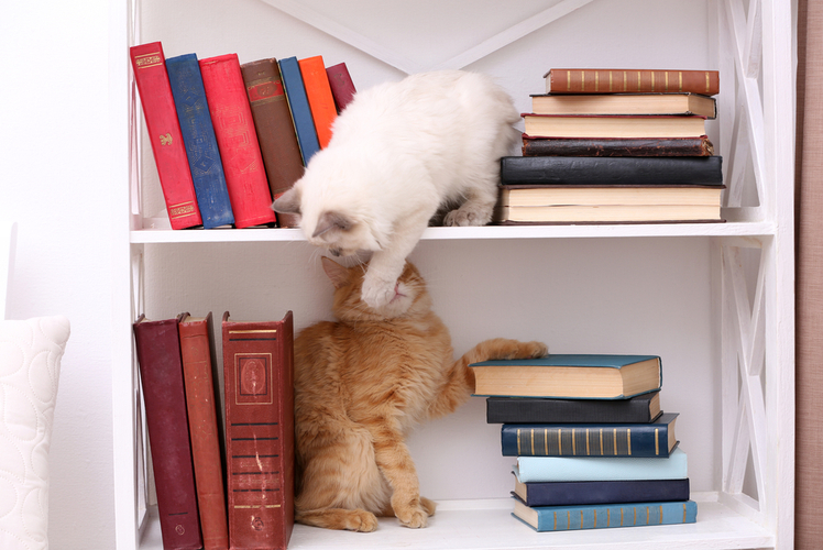 Cat Friendly Bookshelf