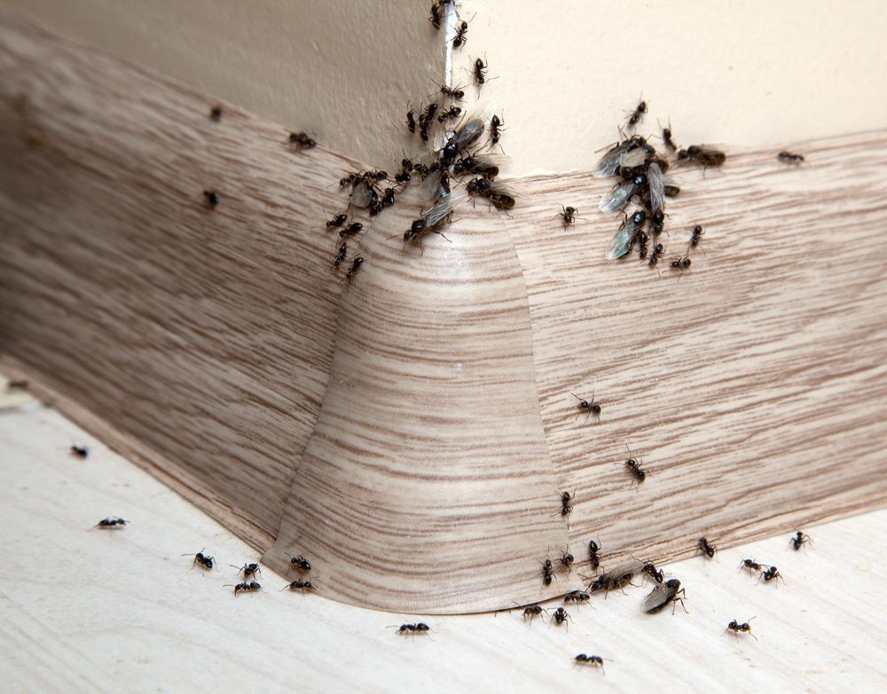 #10 Ants