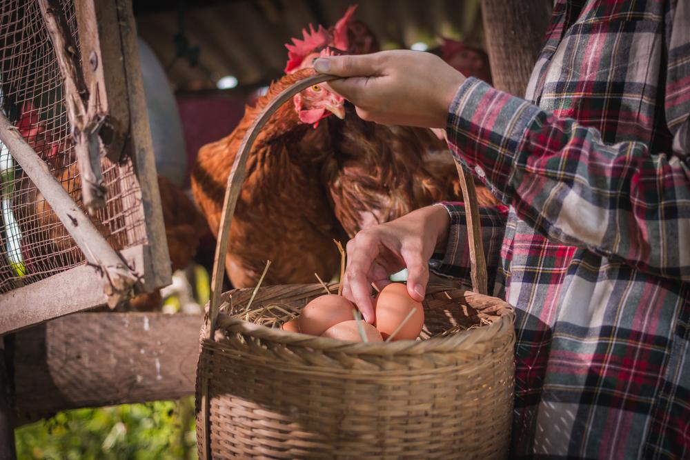 #7 Chicken Coop
