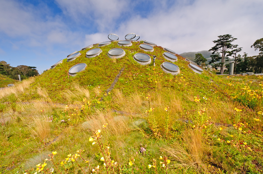 #1 The California Academy of Sciences Living Roof