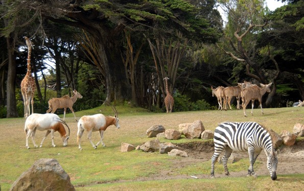 a description of the san francisco zoo which has about 260 animal species Gallery custom vehicle car wrap fort lauderdale miami palm.