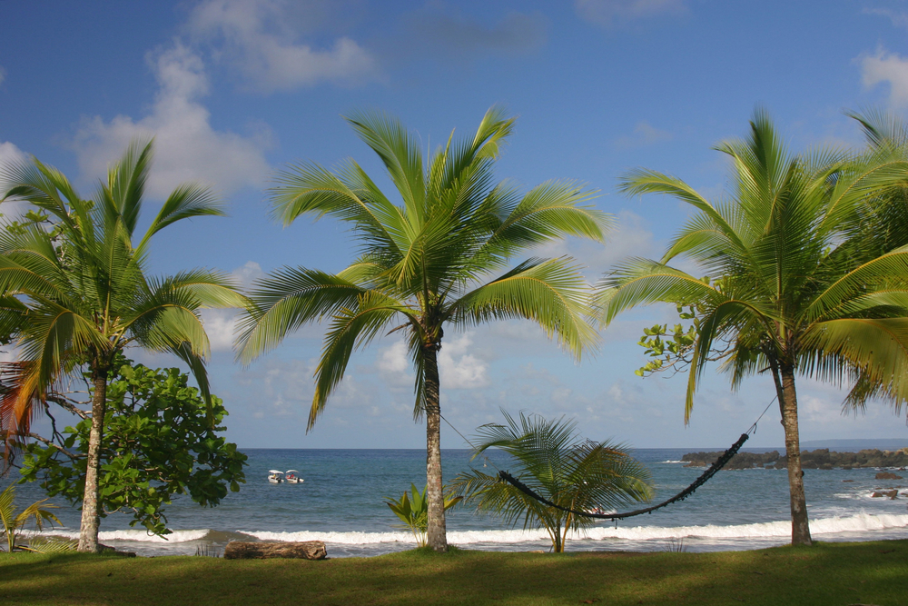 palm tree costa rico
