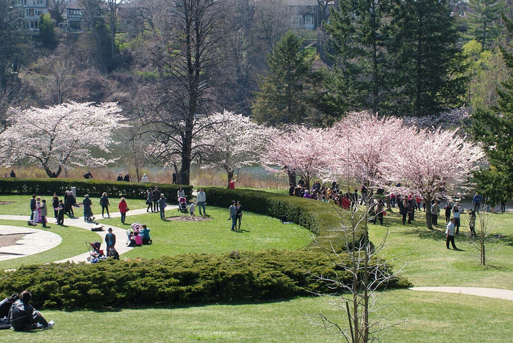 See the cherry blossoms in High Park
