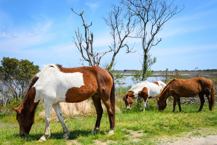 Assateague Island National Seashore, Maryland