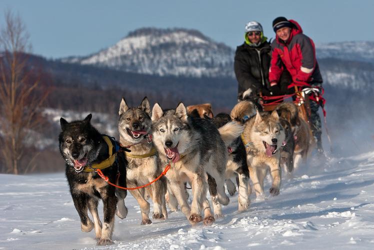 Dog sled, Alaska