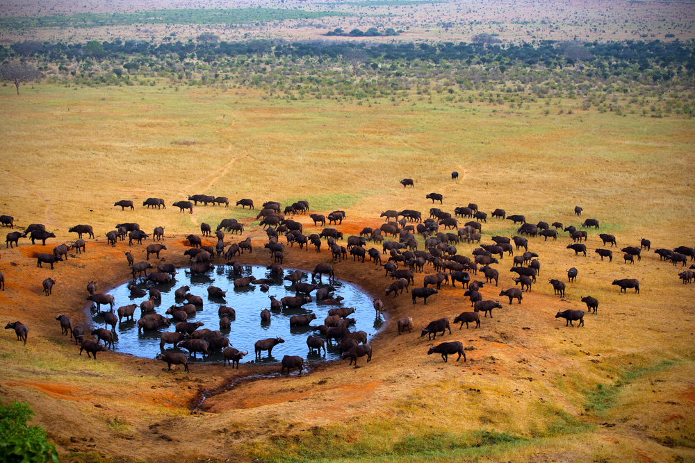 Take care of the environment with Great Safaris