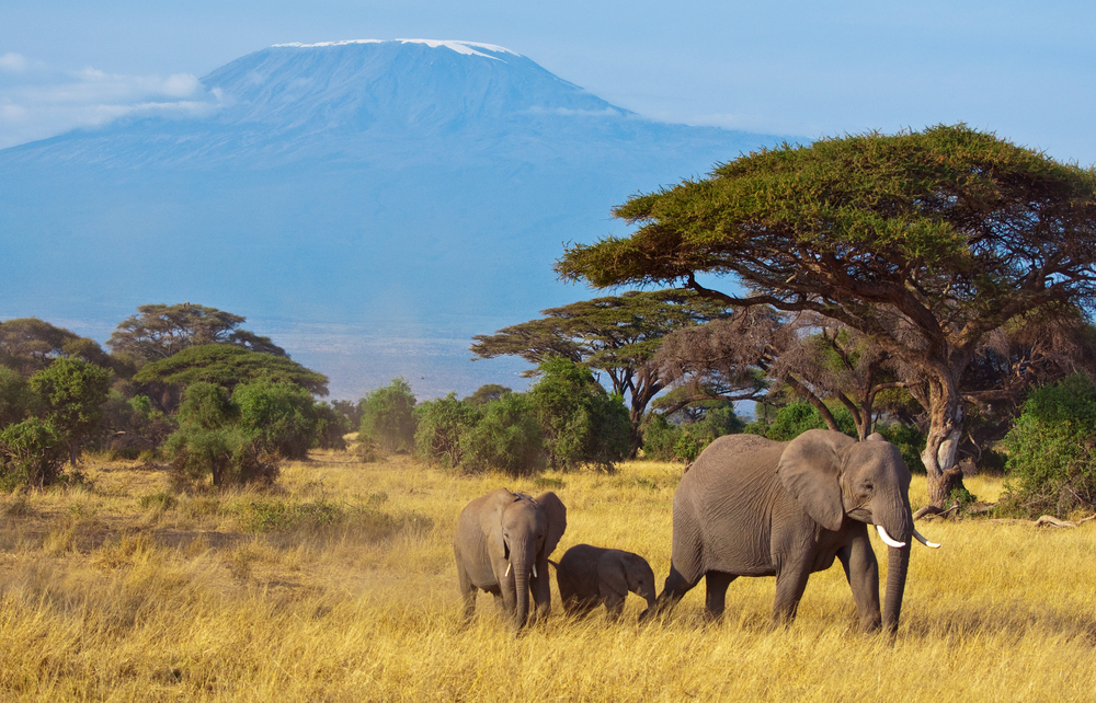 Why A Tanzania Safari Is Just As Good!