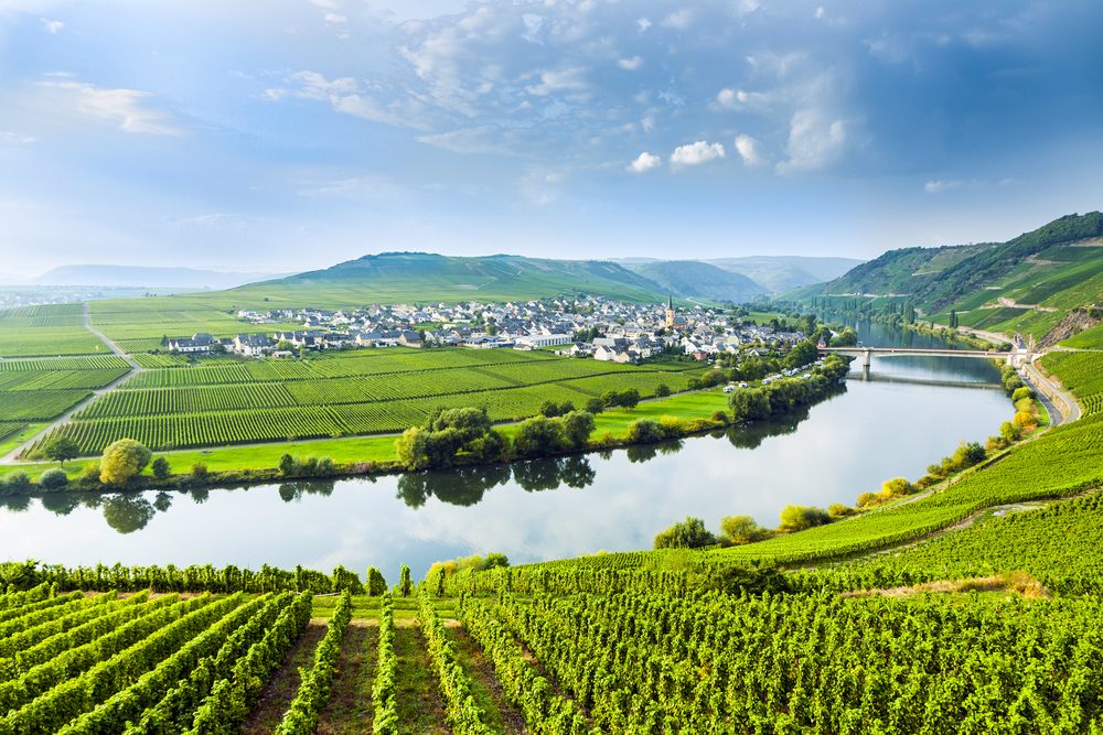 Mosel, Germany vineyard