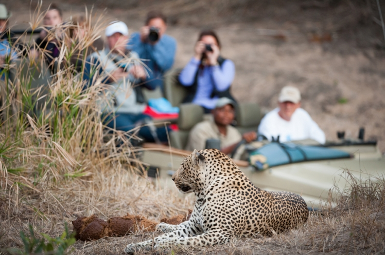 Discover how to find the best African safari deals