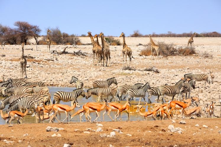 Mundulea Reserve in Namibia