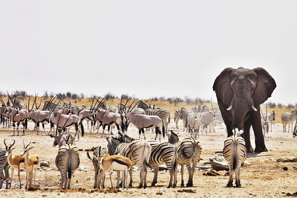 Namibia, Africa