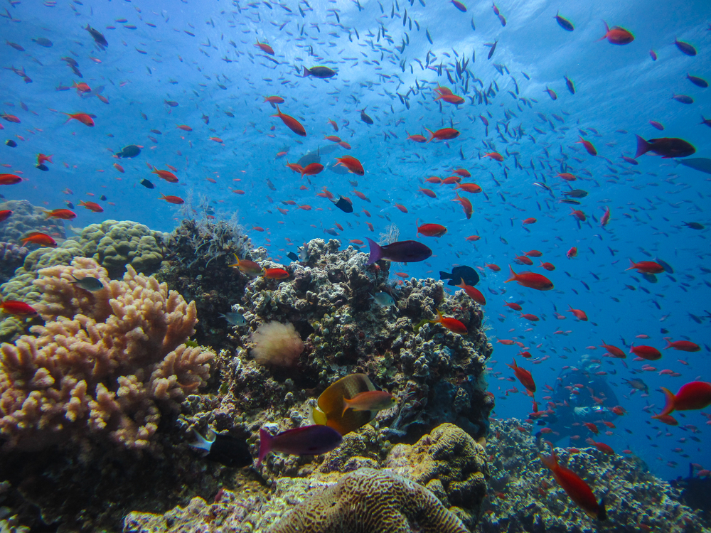 The thrill seeker 39 s bucket list top 50 adrenaline rushes - Best place to dive the great barrier reef ...