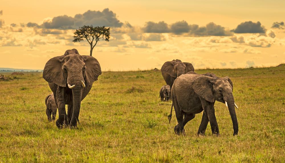 Maasai Mara - Kenya