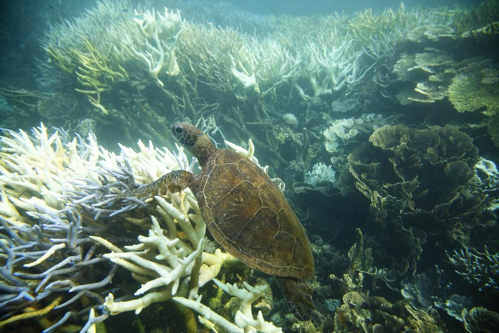 Ningaloo Reef, Australia