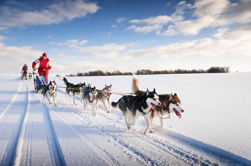 Try Dog-Sled Racing, United States