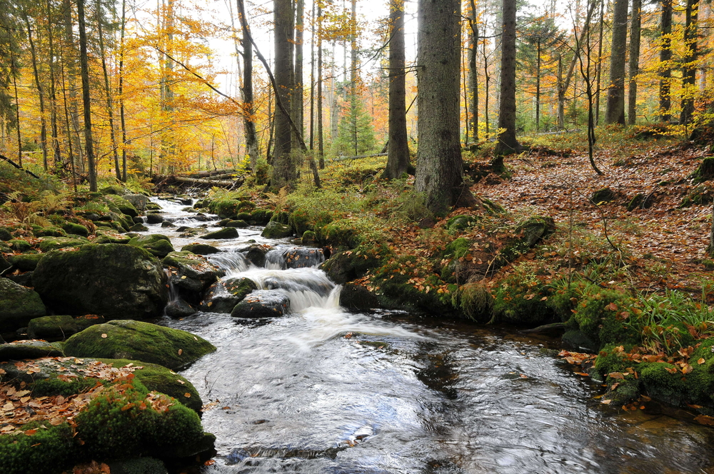 Bavarian Forest National Park, Germany
