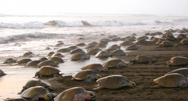 Life Under The Sea: Top Hotspots to Explore Costa Rica's Marine Life