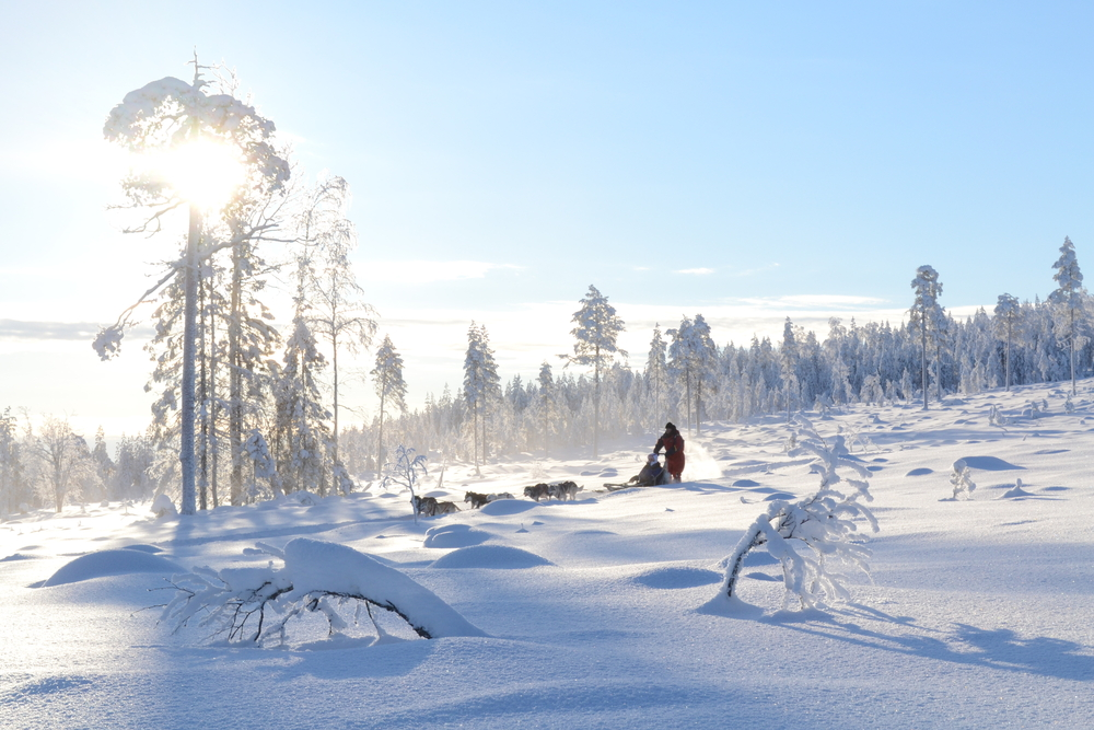 By Sledge Set Off on a Husky Tour in Finland