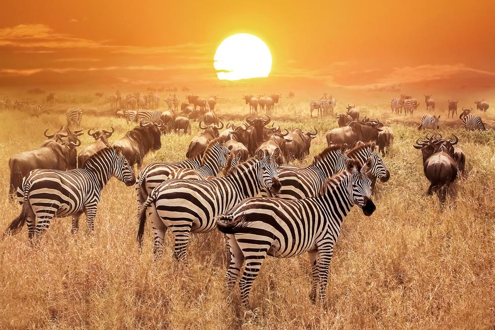 #9 Serengeti National Park, Tanzania