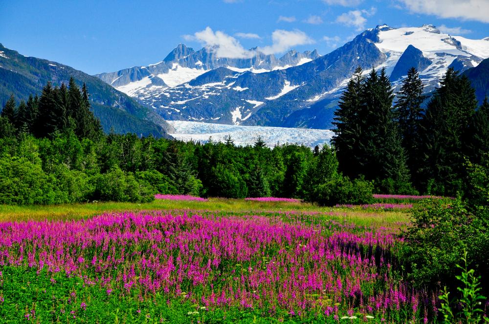 Cya, Society | Alaska, United States