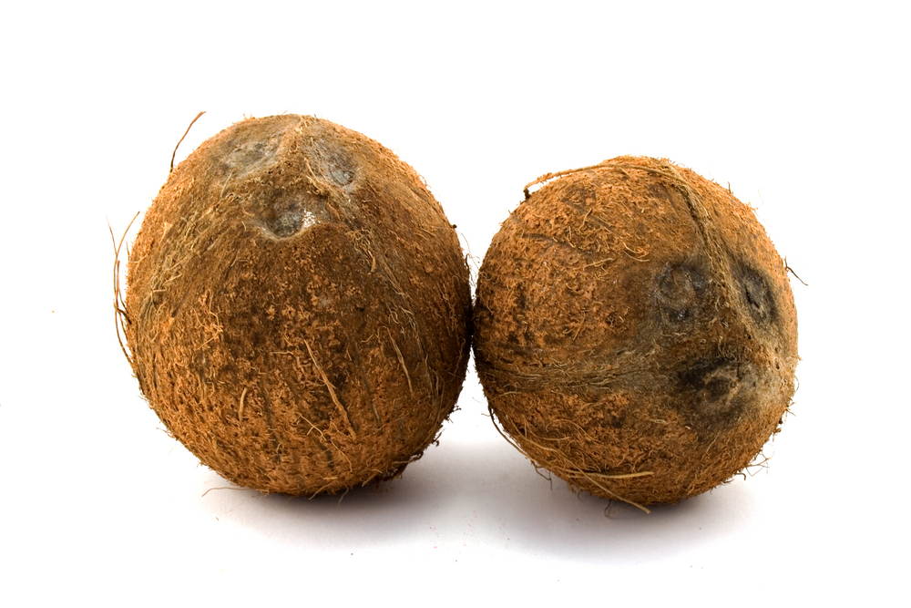 #1 Coconut Games