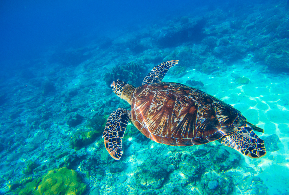 #3 Turtle Islands, Philippines
