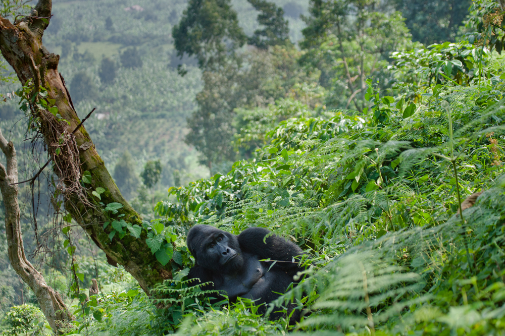 #5 Bwindi Impenetrable Forest, Uganda