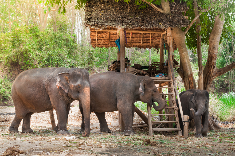 #8 Chiang Mai Elephant Park