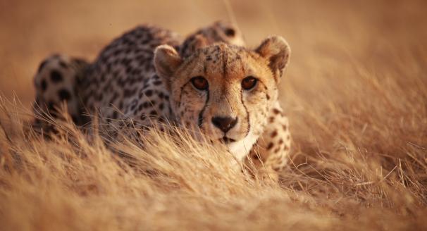 Wildlife Wonders – 10 Rare Animals And Where To See Them