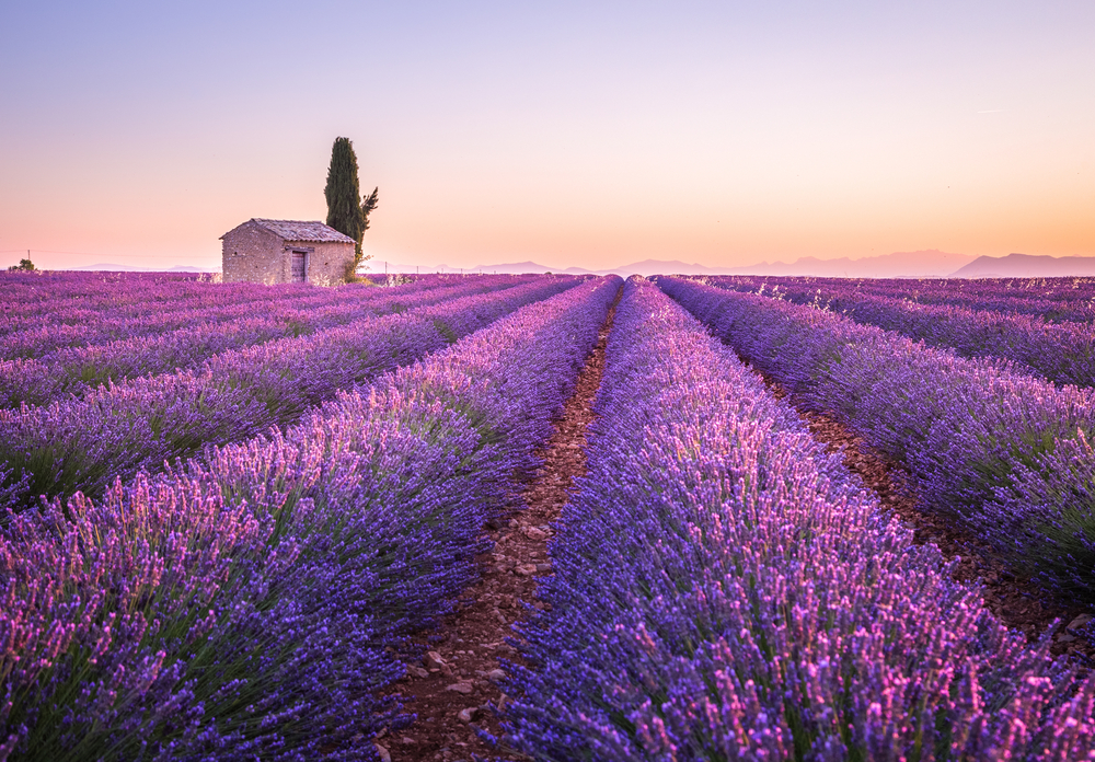 #6 Lavender Fields, France