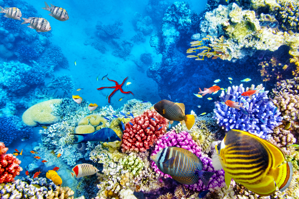 13. Belize Barrier Reef