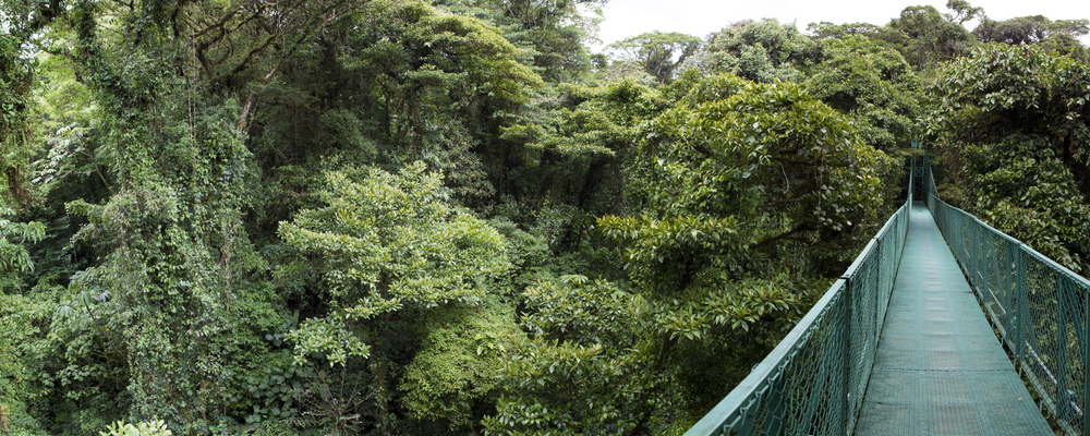 21. Monteverde Cloud Forest