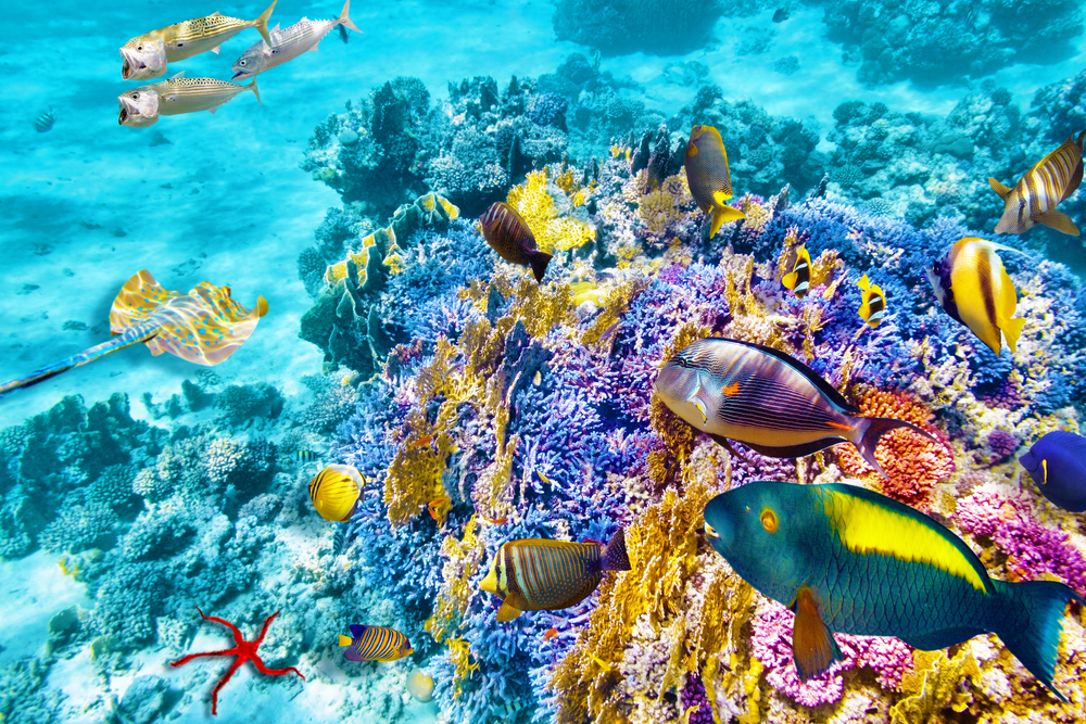 24. Great Barrier Reef, Australia