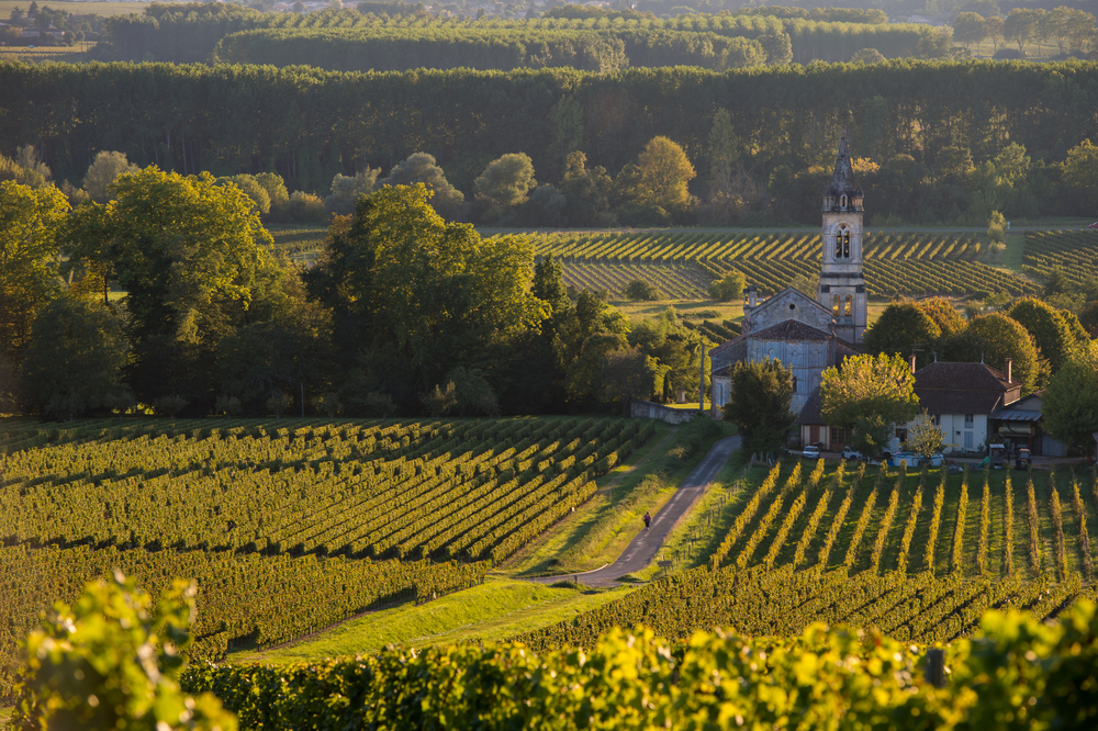 27. France's Vineyards