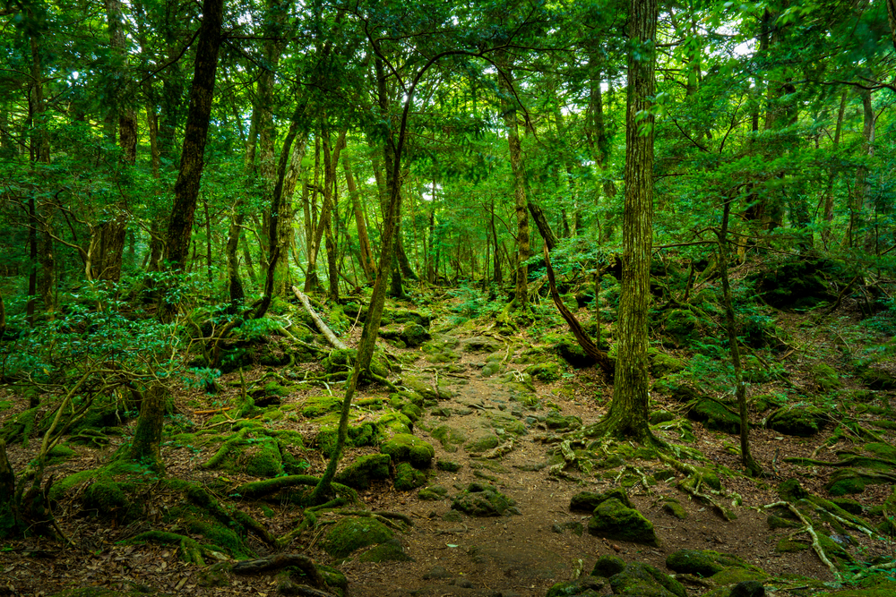 17. Aokigahara Suicide Forest, Japan